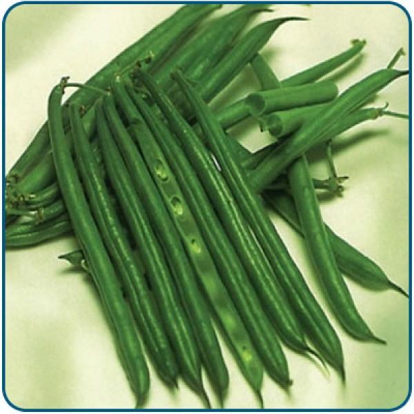 Fasola szparagowa zielona FERRARI
