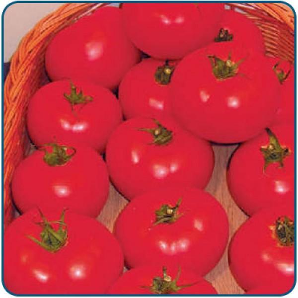 Pomidor szklarniowy LIANNE F1 LSL