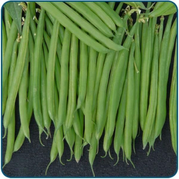 Fasola szparagowa zielona STANLEY