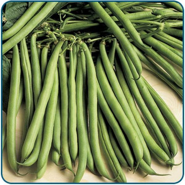 Fasola szparagowa zielona TEMPO